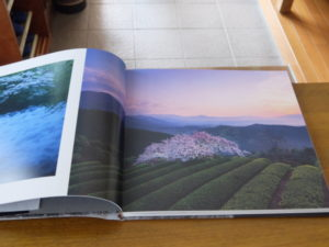 桜の写真集 内容